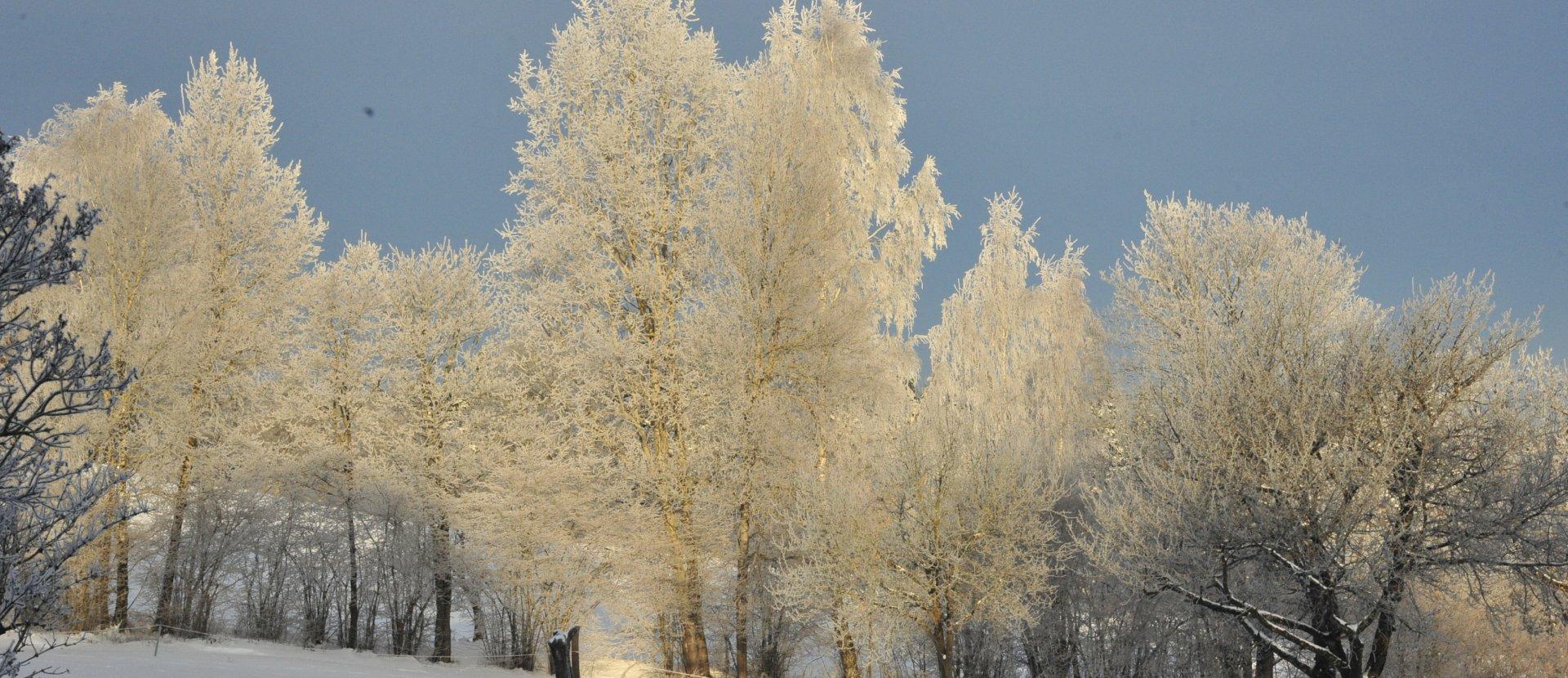 Winterimpressionen Engelberg 1