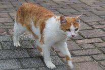 Pezi, erste Katze am Engelberg