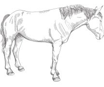 Zitatbild Pferd