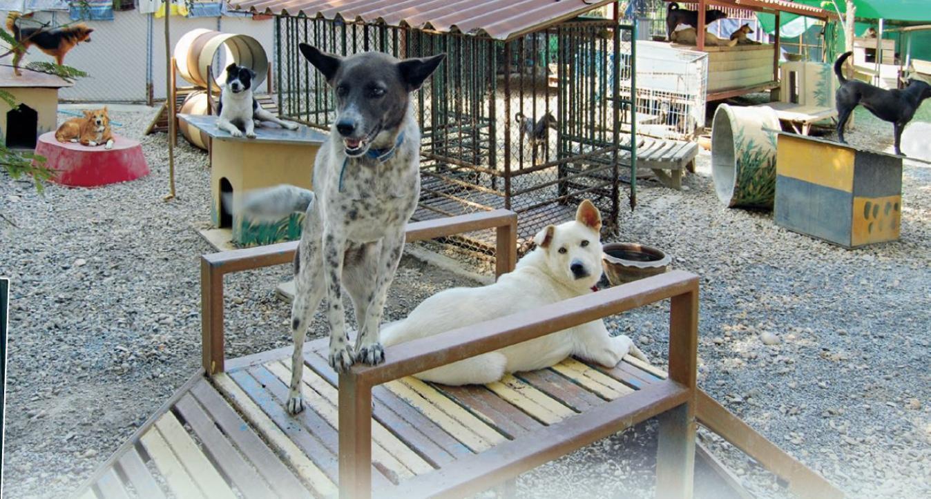 Sreunerhundeprojekt Chiang Mai2