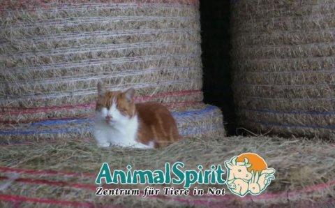 Screenshot Katzenvideo